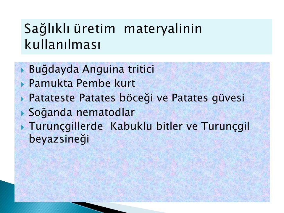 Buğdayda Anguina tritici  Pamukta Pembe kurt  Patateste Patates böceği ve Patates güvesi  Soğanda nematodlar  Turunçgillerde Kabuklu bitler ve T