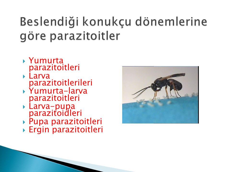  Yumurta parazitoitleri  Larva parazitoitlerileri  Yumurta-larva parazitoitleri  Larva-pupa parazitoidleri  Pupa parazitoitleri  Ergin parazitoi