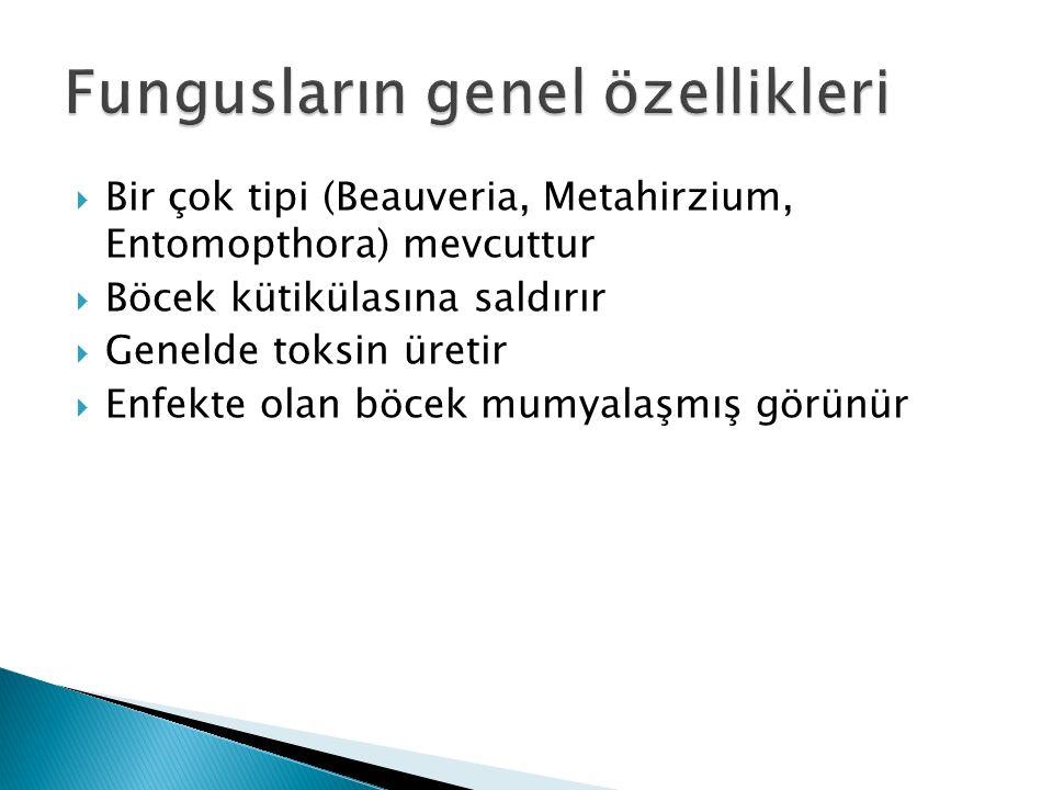  Bir çok tipi (Beauveria, Metahirzium, Entomopthora) mevcuttur  Böcek kütikülasına saldırır  Genelde toksin üretir  Enfekte olan böcek mumyalaşmış