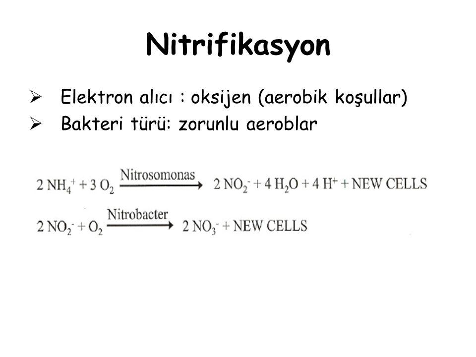 Nitrifikasyon  Elektron alıcı : oksijen (aerobik koşullar)  Bakteri türü: zorunlu aeroblar