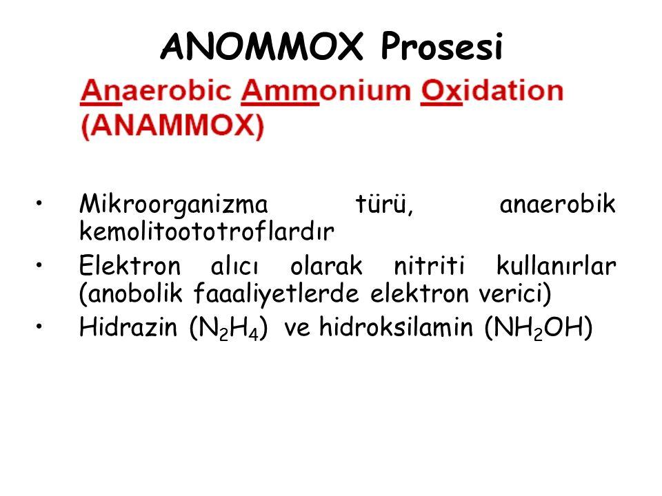 ANOMMOX Prosesi Mikroorganizma türü, anaerobik kemolitoototroflardır Elektron alıcı olarak nitriti kullanırlar (anobolik faaaliyetlerde elektron veric