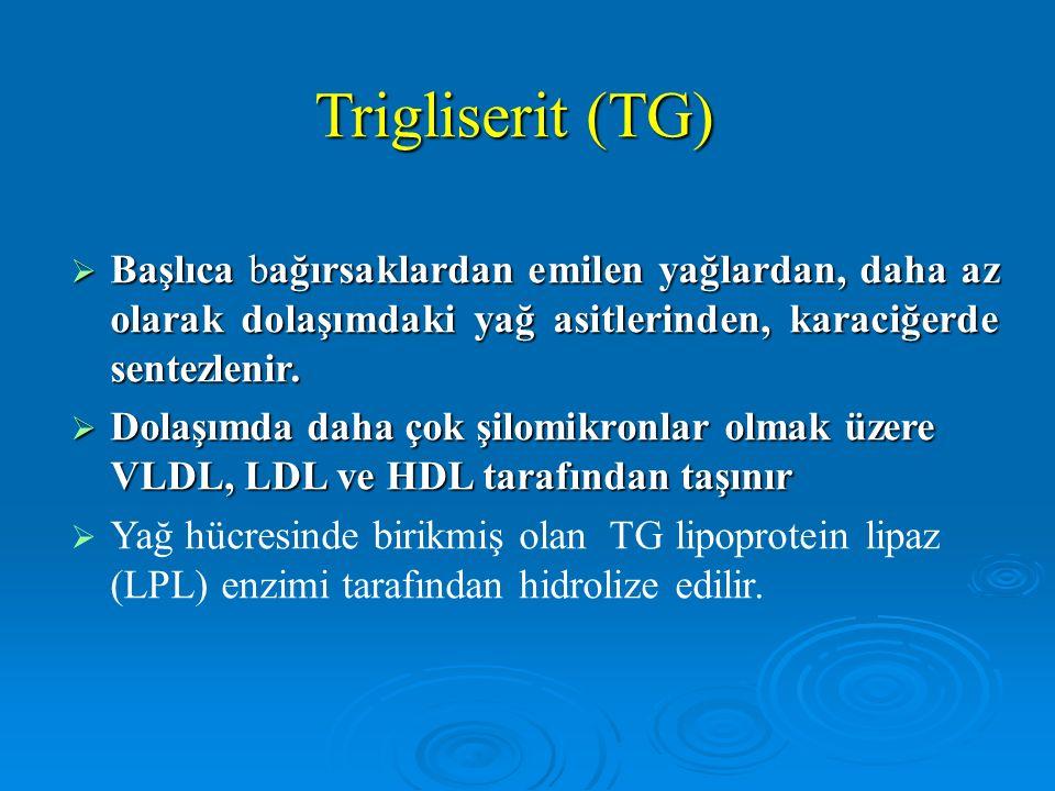 Trigliserit (TG)  Başlıca bağırsaklardan emilen yağlardan, daha az olarak dolaşımdaki yağ asitlerinden, karaciğerde sentezlenir.