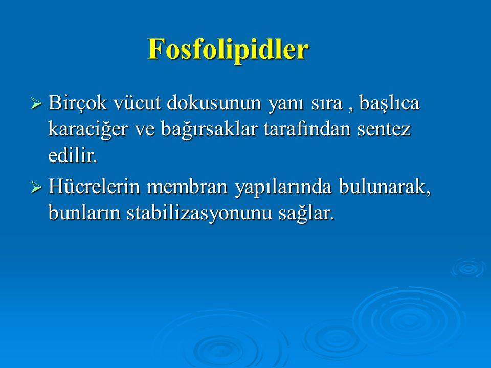 Fosfolipidler  Birçok vücut dokusunun yanı sıra, başlıca karaciğer ve bağırsaklar tarafından sentez edilir.