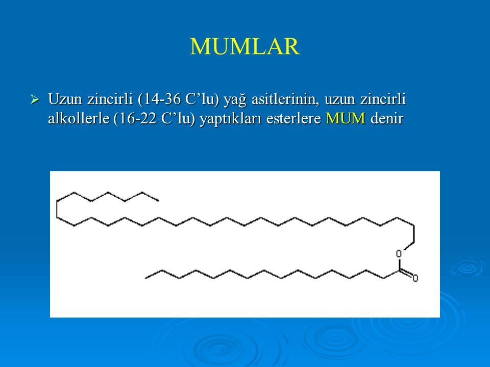 MUMLAR  Uzun zincirli (14-36 C'lu) yağ asitlerinin, uzun zincirli alkollerle (16-22 C'lu) yaptıkları esterlere MUM denir