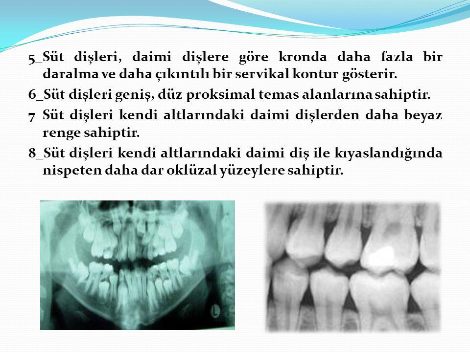 5_Süt dişleri, daimi dişlere göre kronda daha fazla bir daralma ve daha çıkıntılı bir servikal kontur gösterir. 6_Süt dişleri geniş, düz proksimal tem