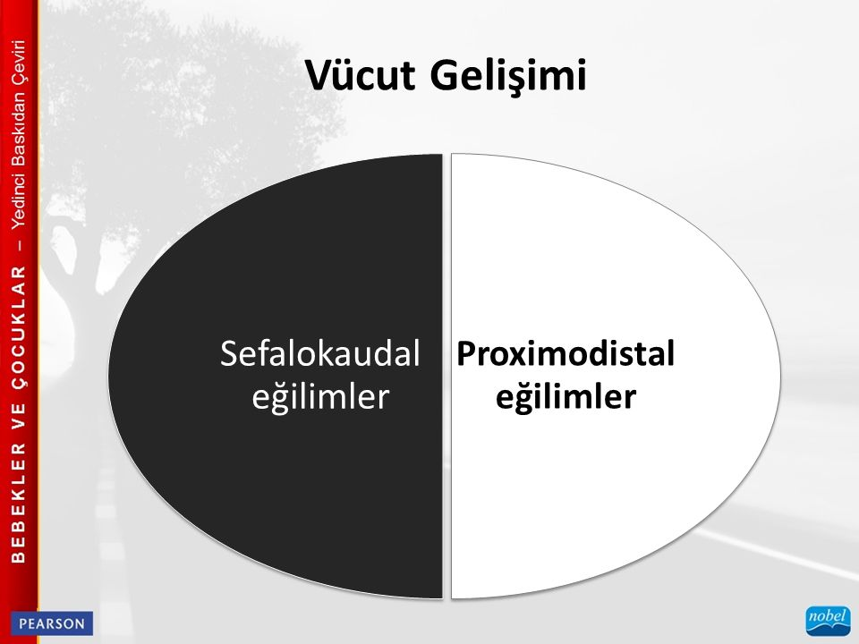 Vücut Gelişimi Proximodistal eğilimler Sefalokaudal eğilimler