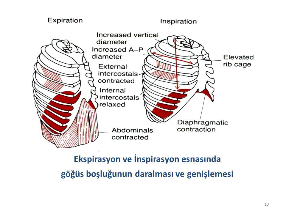 10 Ekspirasyon ve İnspirasyon esnasında göğüs boşluğunun daralması ve genişlemesi