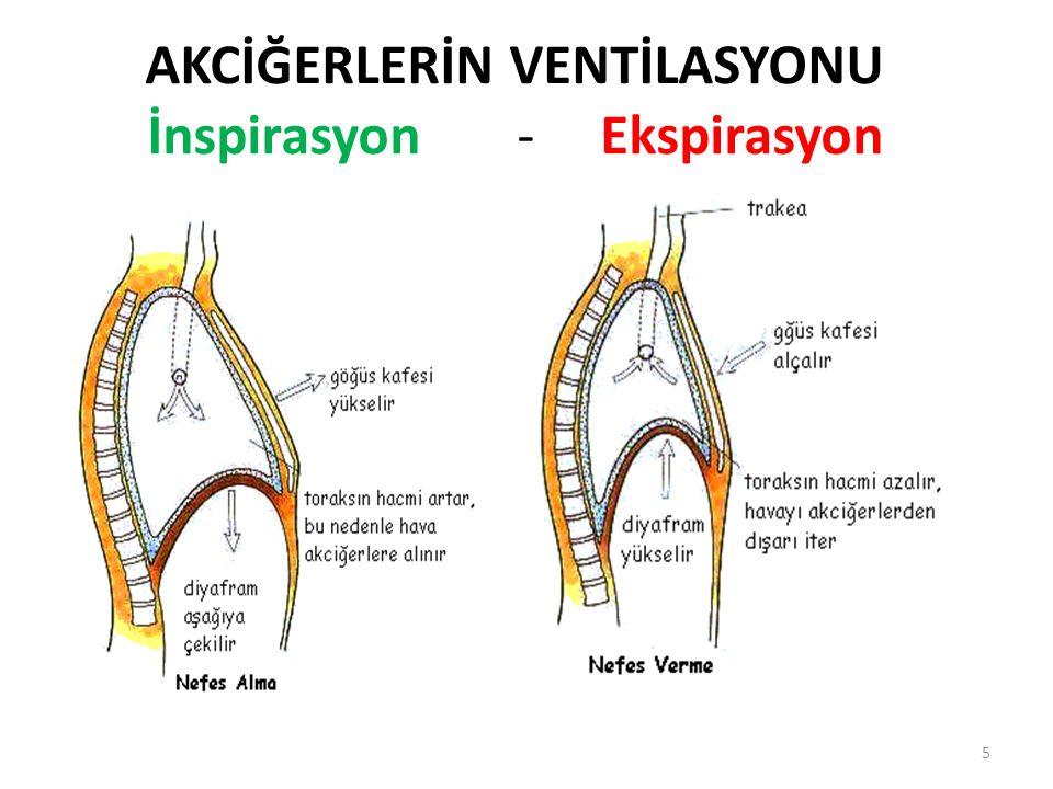 SOLUNUM MEKANİĞİ Akciğerler; (1)göğüs boşluğunu dikine olarak uzatan veya kısaltan diyaframın aşağı ve yukarı hareketiyle (2)göğüs boşluğunun ön-arka çapını artıran ve azaltan kaburgaların yukarı ve aşağı hareketiyle olmak üzere iki yolla genişleyebilir ve büzülebilirler.