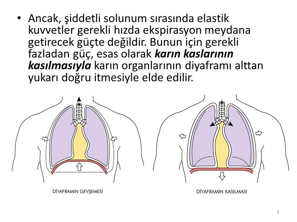 Akciğerleri genişleten ikinci mekanizma göğüs kafesinin yukarı doğru kaldırılmasıdır.