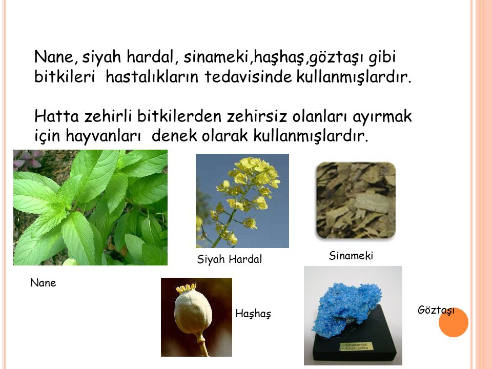 Nane, siyah hardal, sinameki,haşhaş,göztaşı gibi bitkileri hastalıkların tedavisinde kullanmışlardır. Hatta zehirli bitkilerden zehirsiz olanları ayır