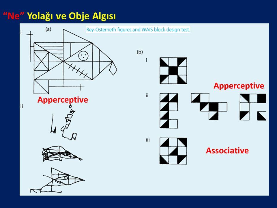 """Ne"" Yolağı ve Obje Algısı Apperceptive Associative"