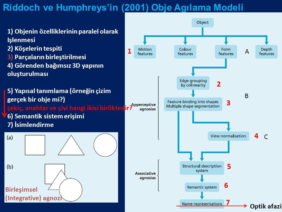 Riddoch ve Humphreys'in (2001) Obje Agılama Modeli Optik afazi 1 2 3 4 5 6 7 1) Objenin özelliklerinin paralel olarak Işlenmesi 2) Köşelerin tespiti 3