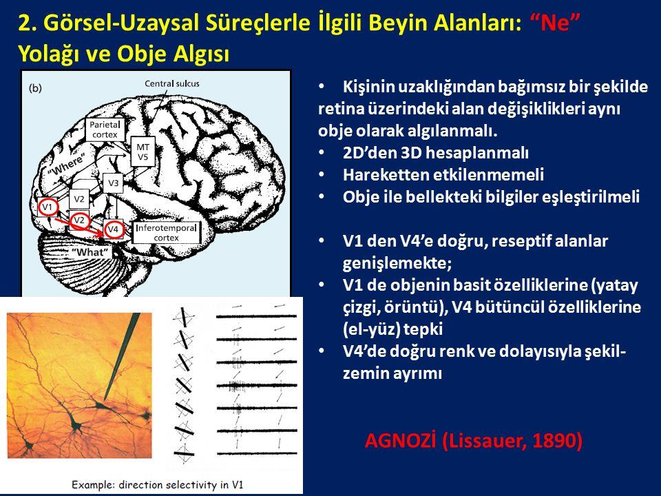 """2. Görsel-Uzaysal Süreçlerle İlgili Beyin Alanları: """"Ne"""" Yolağı ve Obje Algısı Kişinin uzaklığından bağımsız bir şekilde retina üzerindeki alan değişi"""