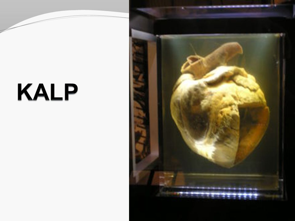 Kalbin bölmeleri Bölmeler: Septum interatriale Septum interventriculare Septum atrioventriculare