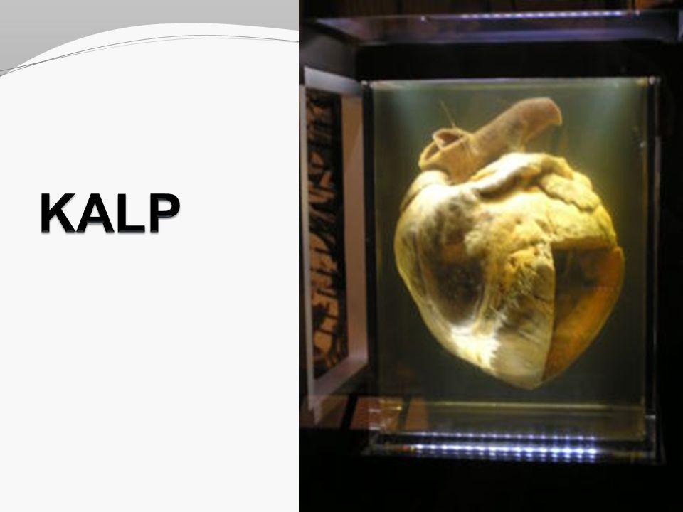 Kalbin Arterleri A.coronaria dextra ( Pars ascendens aortae, sulcus coronarius içinde ) A.coronaria sinistra ( Pars ascendens aortae )