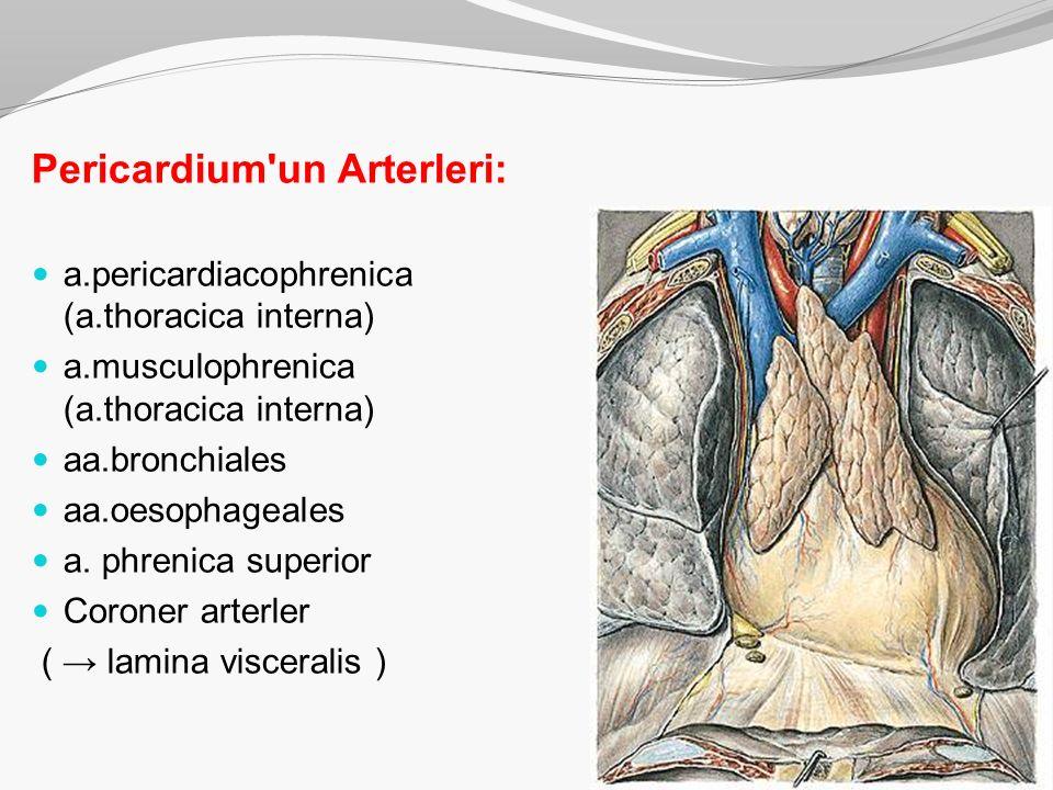 Pericardium'un Arterleri: a.pericardiacophrenica (a.thoracica interna) a.musculophrenica (a.thoracica interna) aa.bronchiales aa.oesophageales a. phre