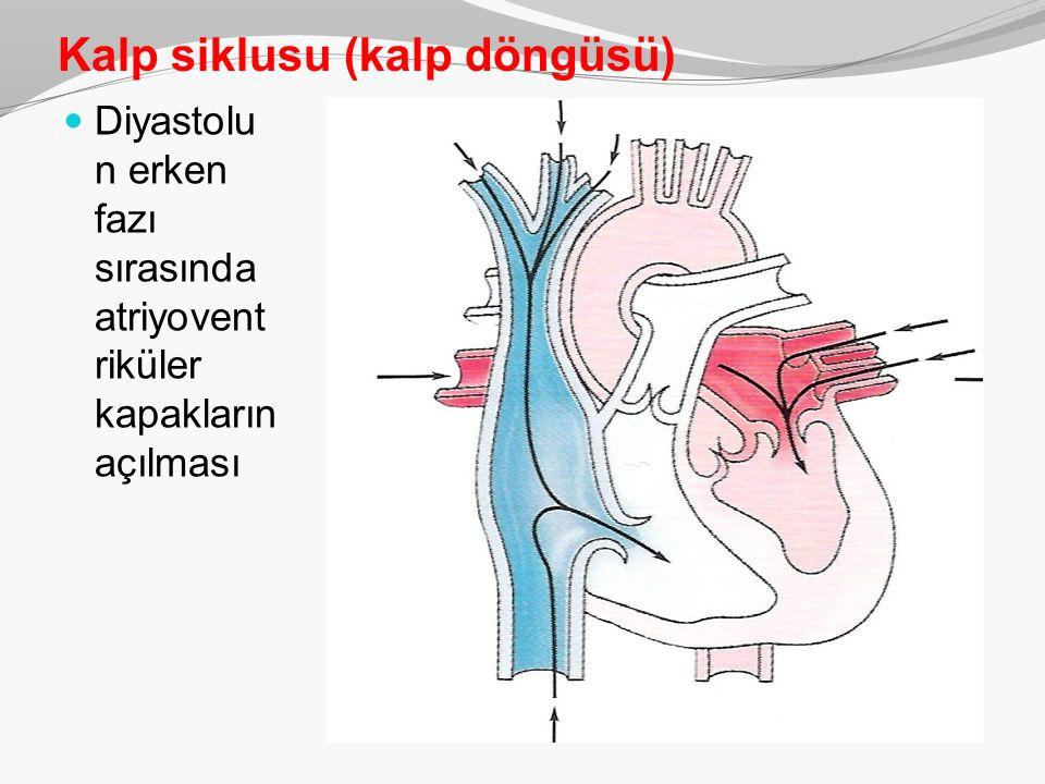 Kalp siklusu (kalp döngüsü) Diyastolu n erken fazı sırasında atriyovent riküler kapakların açılması