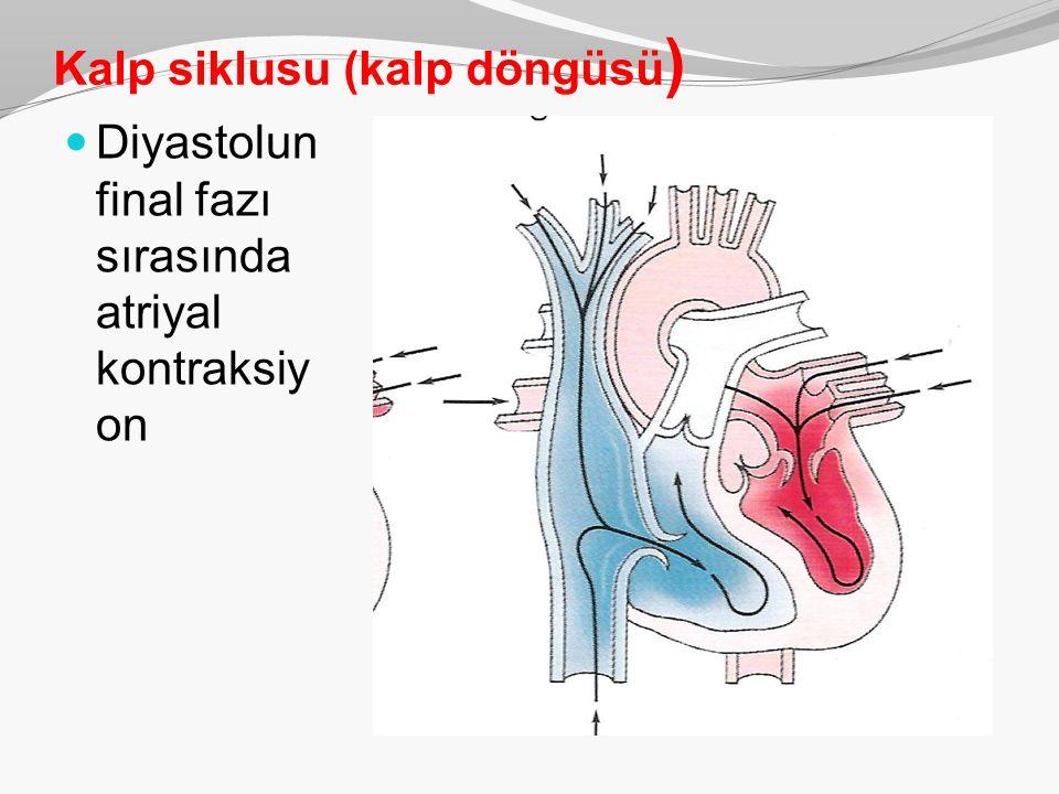 Kalp siklusu (kalp döngüsü ) Diyastolun final fazı sırasında atriyal kontraksiy on