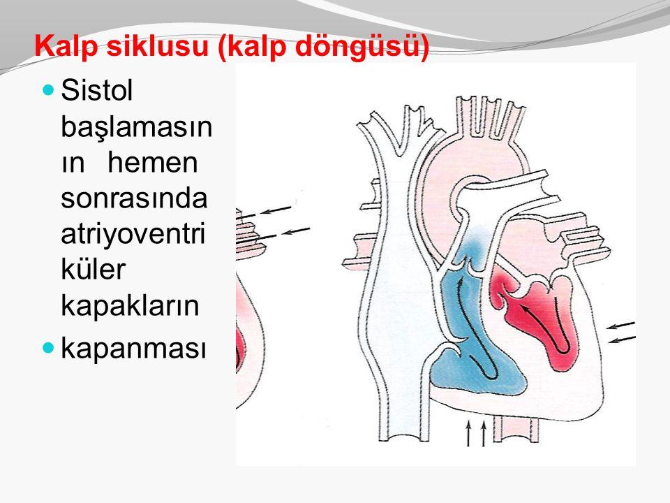 Kalp siklusu (kalp döngüsü) Sistol başlamasın ınhemen sonrasında atriyoventri küler kapakların kapanması