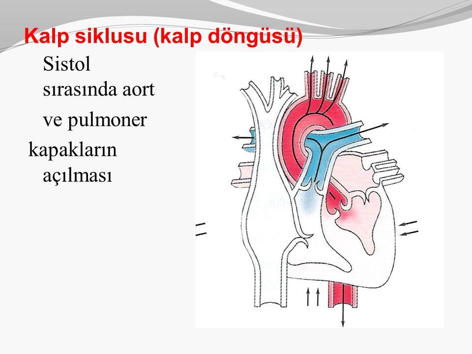 Kalp siklusu (kalp döngüsü) Sistol sırasında aort ve pulmoner kapakların açılması
