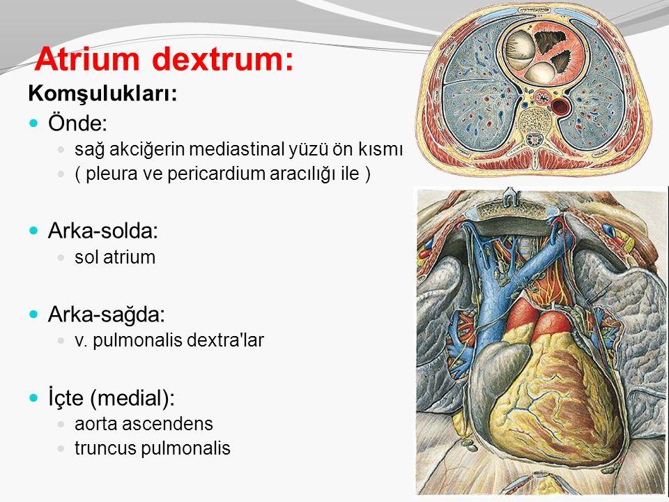 Atrium dextrum: Komşulukları: Önde: sağ akciğerin mediastinal yüzü ön kısmı ( pleura ve pericardium aracılığı ile ) Arka-solda: sol atrium Arka-sağda: