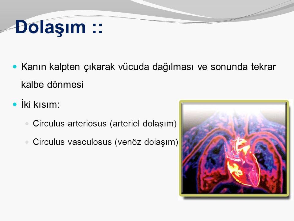 Dolaşım :: Kanın kalpten çıkarak vücuda dağılması ve sonunda tekrar kalbe dönmesi İki kısım: Circulus arteriosus (arteriel dolaşım) Circulus vasculosu