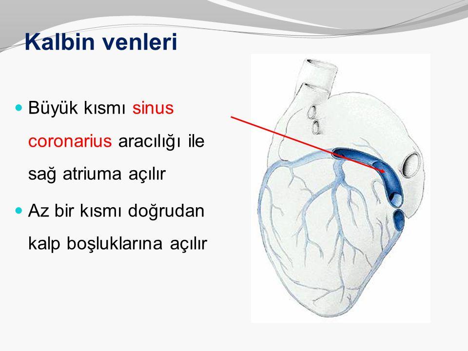 Kalbin venleri Büyük kısmı sinus coronarius aracılığı ile sağ atriuma açılır Az bir kısmı doğrudan kalp boşluklarına açılır