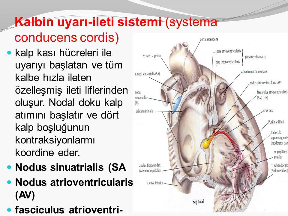 Kalbin uyarı-ileti sistemi (systema conducens cordis) kalp kası hücreleri ile uyarıyı başlatan ve tüm kalbe hızla ileten özelleşmiş ileti liflerinden