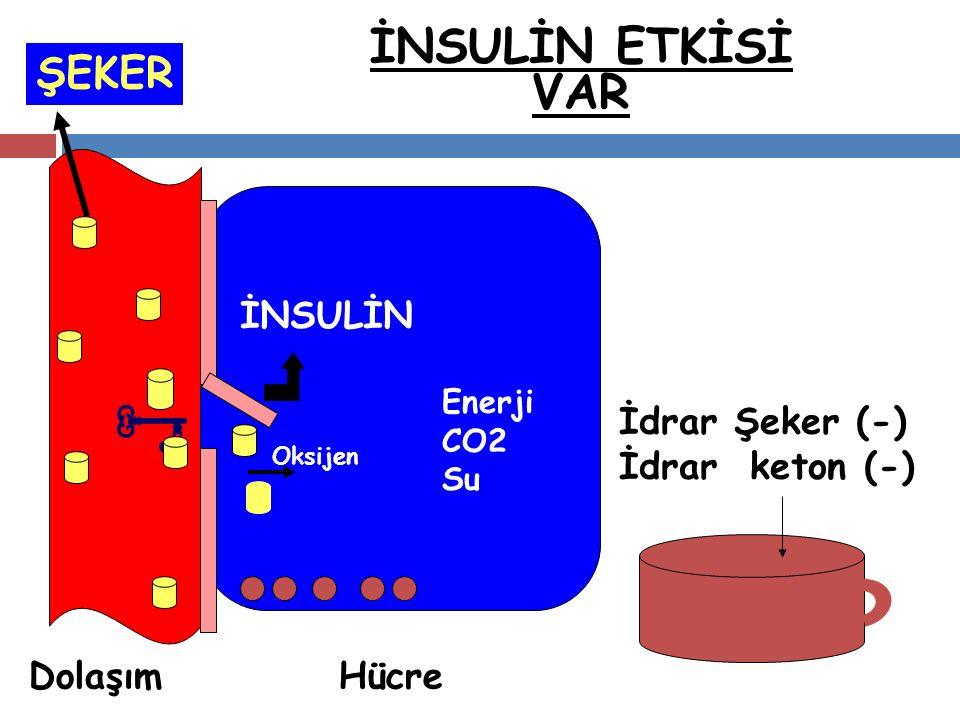 İNSULİN ETKİSİ VAR İNSULİN Oksijen Enerji CO2 Su HücreDolaşım ŞEKER İdrar Şeker (-) İdrar keton (-) ..