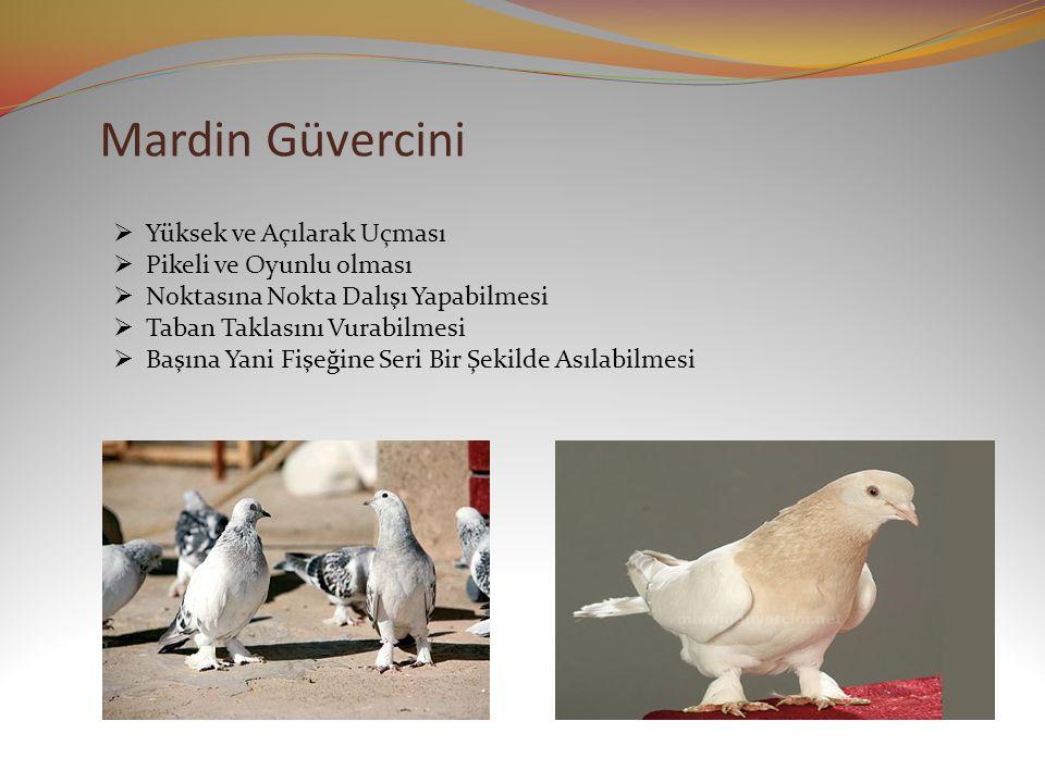 Mardin Güvercini  Yüksek ve Açılarak Uçması  Pikeli ve Oyunlu olması  Noktasına Nokta Dalışı Yapabilmesi  Taban Taklasını Vurabilmesi  Başına Yani Fişeğine Seri Bir Şekilde Asılabilmesi