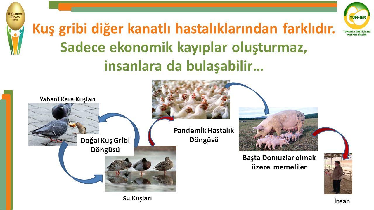 Kuş gribi diğer kanatlı hastalıklarından farklıdır.