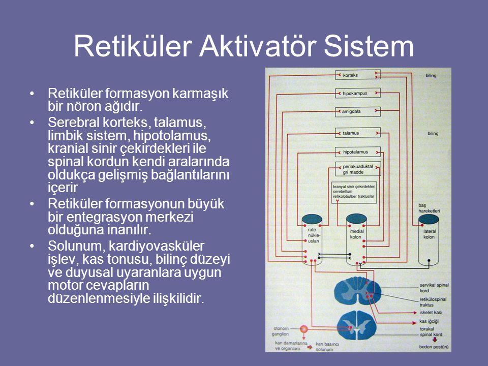 Retiküler Aktivatör Sistem Retiküler formasyon karmaşık bir nöron ağıdır. Serebral korteks, talamus, limbik sistem, hipotolamus, kranial sinir çekirde