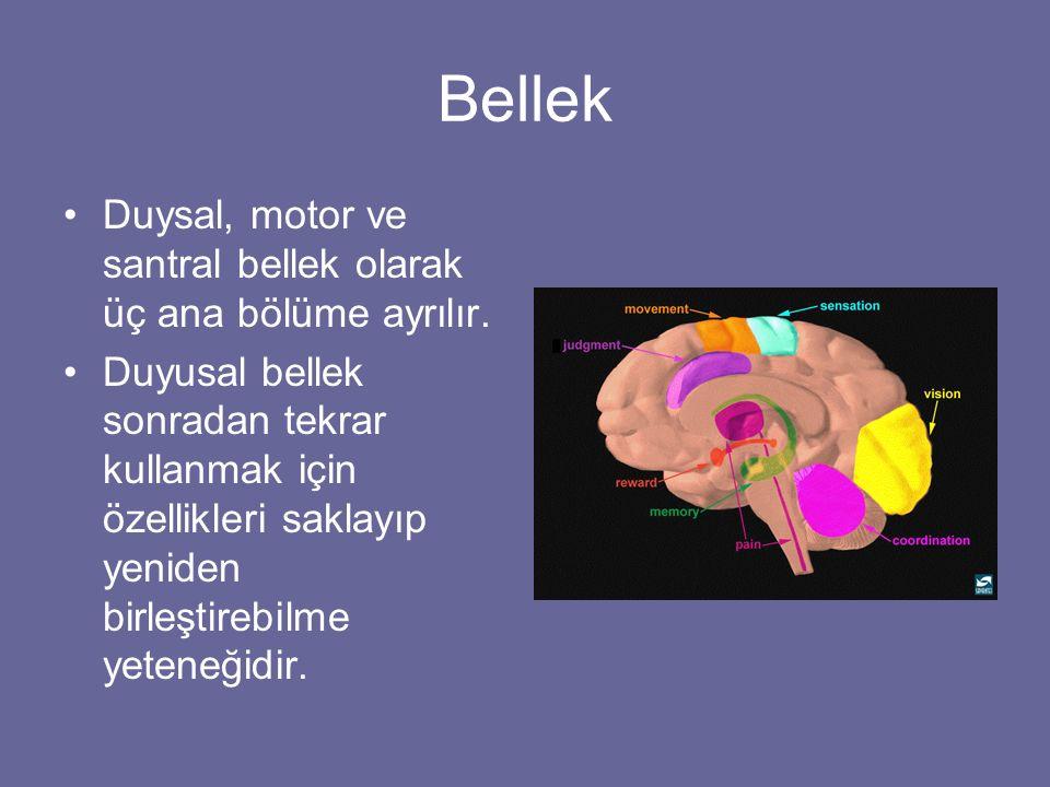 Bellek Duysal, motor ve santral bellek olarak üç ana bölüme ayrılır. Duyusal bellek sonradan tekrar kullanmak için özellikleri saklayıp yeniden birleş