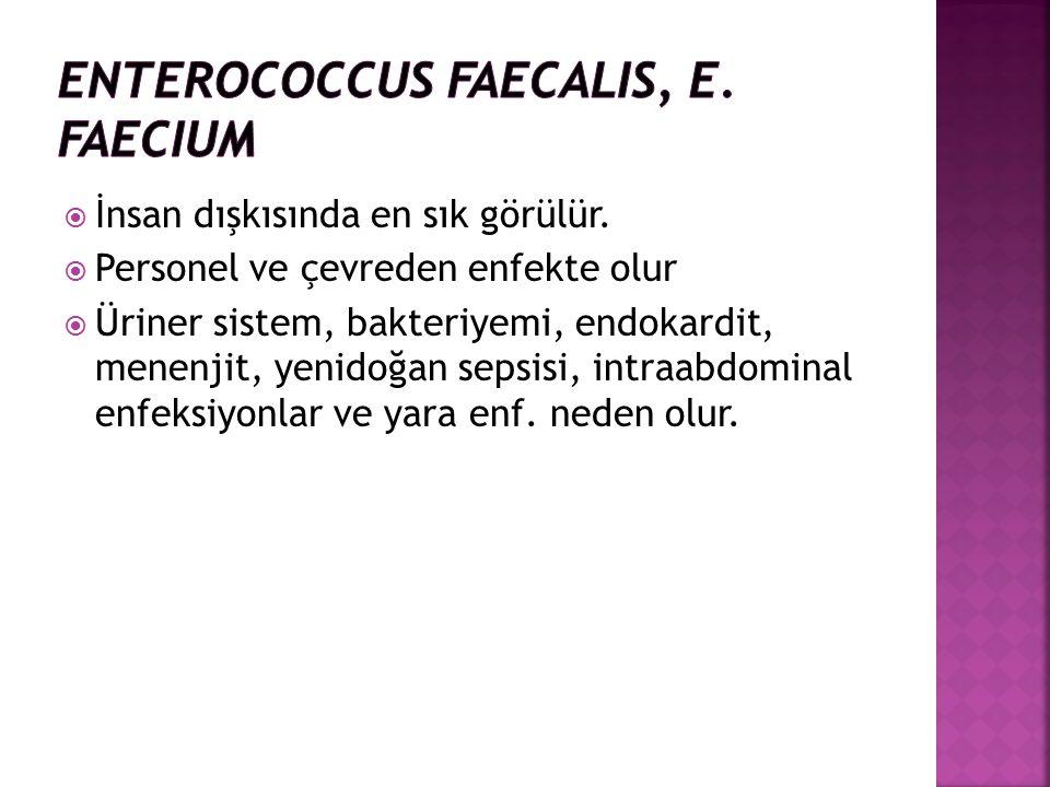  İnsan dışkısında en sık görülür.  Personel ve çevreden enfekte olur  Üriner sistem, bakteriyemi, endokardit, menenjit, yenidoğan sepsisi, intraabd