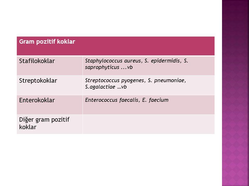 Gram pozitif koklar Stafilokoklar Staphylococcus aureus, S. epidermidis, S. saprophyticus...vb Streptokoklar Streptococcus pyogenes, S. pneumoniae, S.