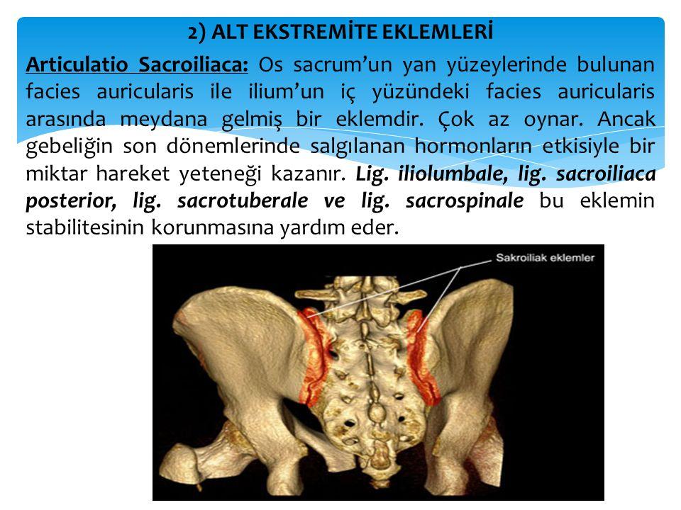 2) ALT EKSTREMİTE EKLEMLERİ Articulatio Sacroiliaca: Os sacrum'un yan yüzeylerinde bulunan facies auricularis ile ilium'un iç yüzündeki facies auricul