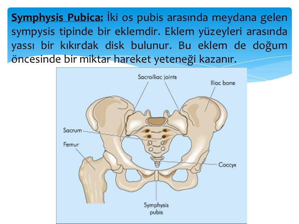 Symphysis Pubica: İki os pubis arasında meydana gelen sympysis tipinde bir eklemdir. Eklem yüzeyleri arasında yassı bir kıkırdak disk bulunur. Bu ekle