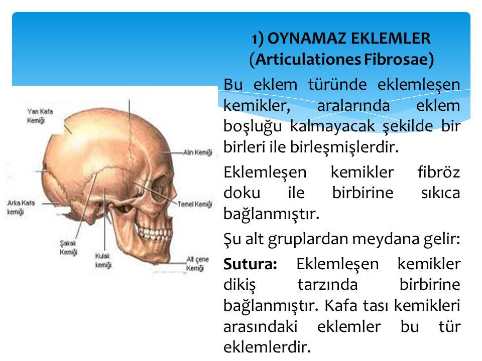 1) OYNAMAZ EKLEMLER (Articulationes Fibrosae) Bu eklem türünde eklemleşen kemikler, aralarında eklem boşluğu kalmayacak şekilde bir birleri ile birleş