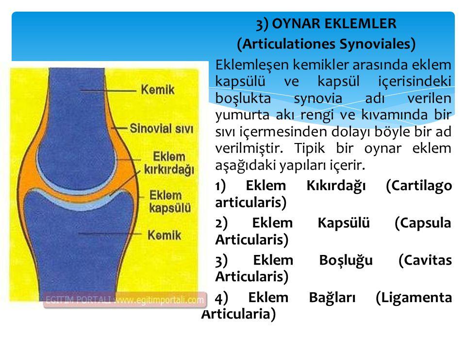 3) OYNAR EKLEMLER (Articulationes Synoviales)  Eklemleşen kemikler arasında eklem kapsülü ve kapsül içerisindeki boşlukta synovia adı verilen yumurta