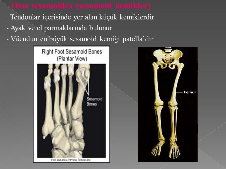 Ossa sesamoidea (sesamoid kemikler) - Tendonlar içerisinde yer alan küçük kemiklerdir - Ayak ve el parmaklarında bulunur - Vücudun en büyük sesamoid kemiği patella'dır
