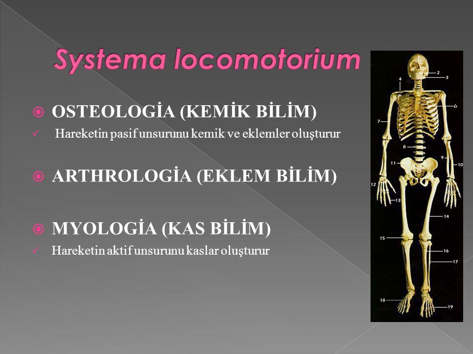  OSTEOLOGİA (KEMİK BİLİM) Hareketin pasif unsurunu kemik ve eklemler oluşturur  ARTHROLOGİA (EKLEM BİLİM)  MYOLOGİA (KAS BİLİM) Hareketin aktif unsurunu kaslar oluşturur