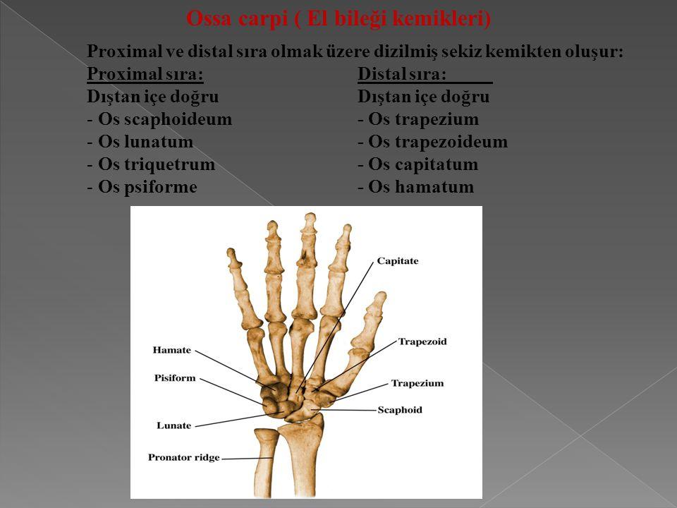 Ossa carpi ( El bileği kemikleri) Proximal ve distal sıra olmak üzere dizilmiş sekiz kemikten oluşur: Proximal sıra:Distal sıra:Dıştan içe doğru - Os scaphoideum- Os trapezium - Os lunatum- Os trapezoideum - Os triquetrum- Os capitatum - Os psiforme- Os hamatum