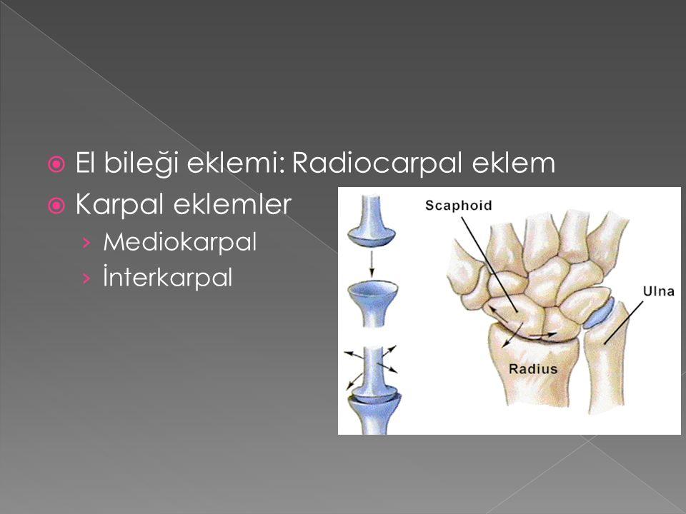  El bileği eklemi: Radiocarpal eklem  Karpal eklemler › Mediokarpal › İnterkarpal