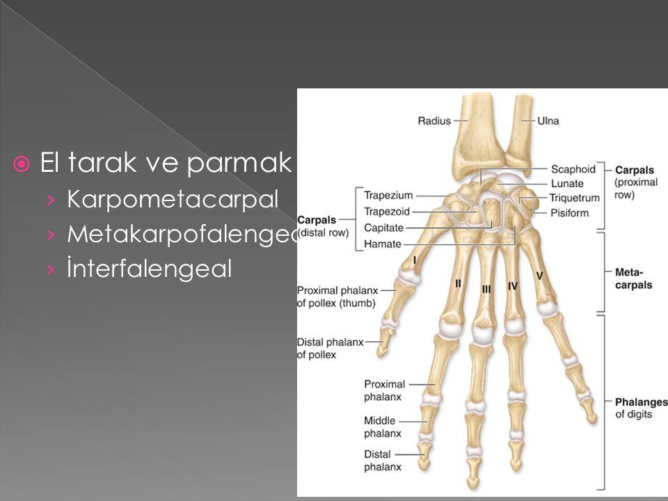  El tarak ve parmak eklem › Karpometacarpal › Metakarpofalengeal › İnterfalengeal