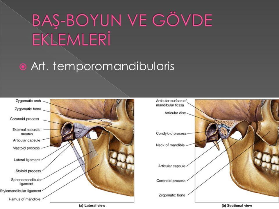 Art. temporomandibularis