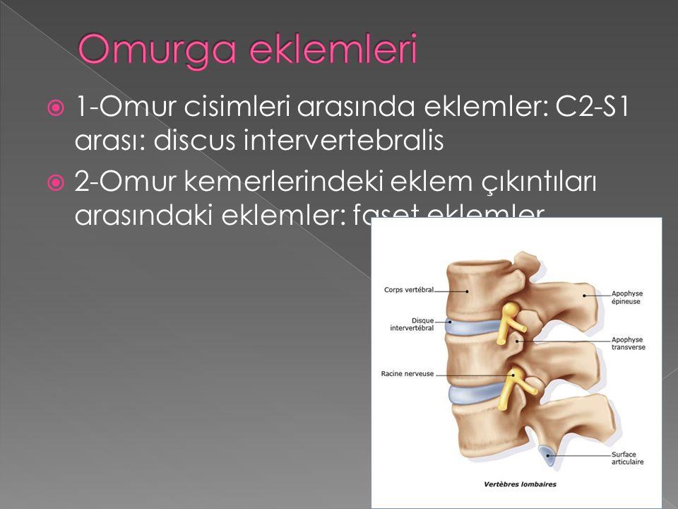  1-Omur cisimleri arasında eklemler: C2-S1 arası: discus intervertebralis  2-Omur kemerlerindeki eklem çıkıntıları arasındaki eklemler: faset eklemler