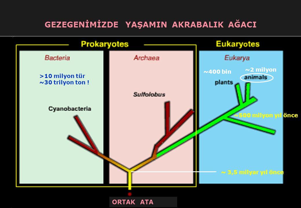 + 0,15 N 0,85 N N MS 900-1200 yılları arasında Anadolu'ya gelen 100-150 bin civarındaki Türkmen o zamanlar Anadolu'da yaşamakta bulunan ~ 1 milyon civarındaki yerli halkla son bin yıllık süreçte genetik-kültürel anlamda karışmışlar ve Türkiye halkını meydana getirmişlerdir.