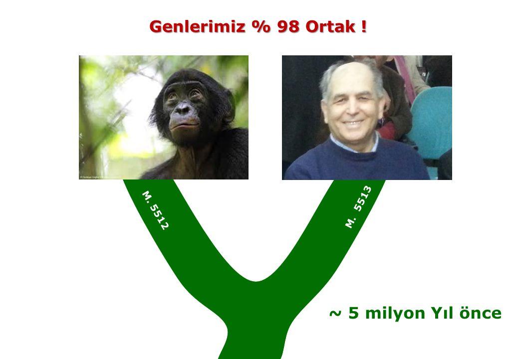 ~ 5 milyon Yıl önce Genlerimiz % 98 Ortak ! Genlerimiz % 98 Ortak ! M. 5513 M. 5512