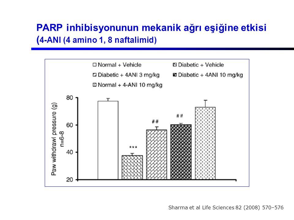 PARP inhibisyonunun mekanik ağrı eşiğine etkisi ( 4-ANI (4 amino 1, 8 naftalimid) Sharma et al Life Sciences 82 (2008) 570–576