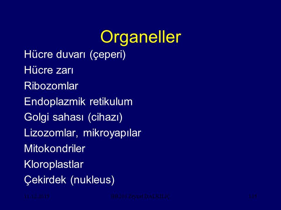 11.12.2015105 Organeller Hücre duvarı (çeperi) Hücre zarı Ribozomlar Endoplazmik retikulum Golgi sahası (cihazı) Lizozomlar, mikroyapılar Mitokondriler Kloroplastlar Çekirdek (nukleus) BB203 Zeynel DALKILIÇ